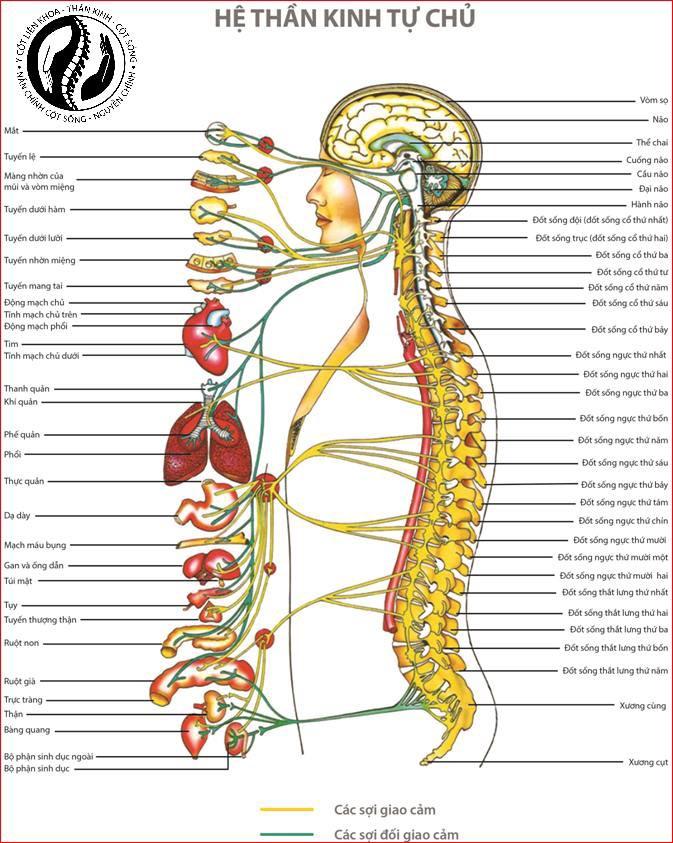 Các bệnh về cột sống thường gặp và cách phòng ngừa