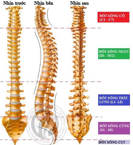 Cột sống cơ thể người